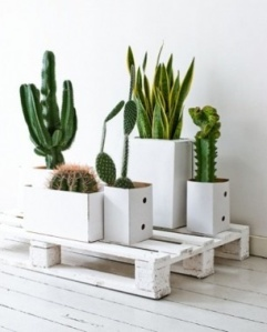 Cactus Strak