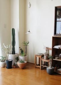 Cactus Woestijn in Huis