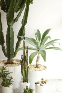 Funky cactussen geven een speels en groen effect in jouw interieur