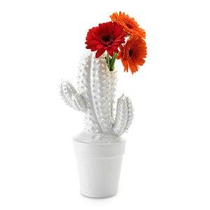 Cactusvaas4