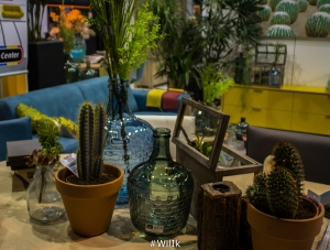 Wonen Cactus 2
