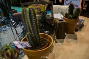 Wonen Cactus
