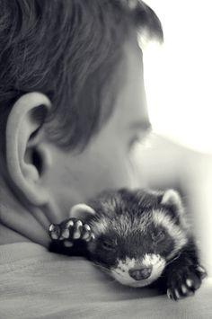 Ferret_Fret_Fretje_Huisdier_Schattig_Cute_Pet